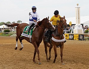 Winner Shackleford at the 136th Running of the Preakness Stakes