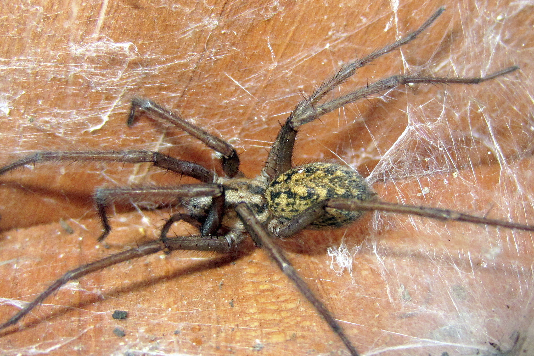 Spiders: Wyoming\'s Most Annoying Pest Infestation